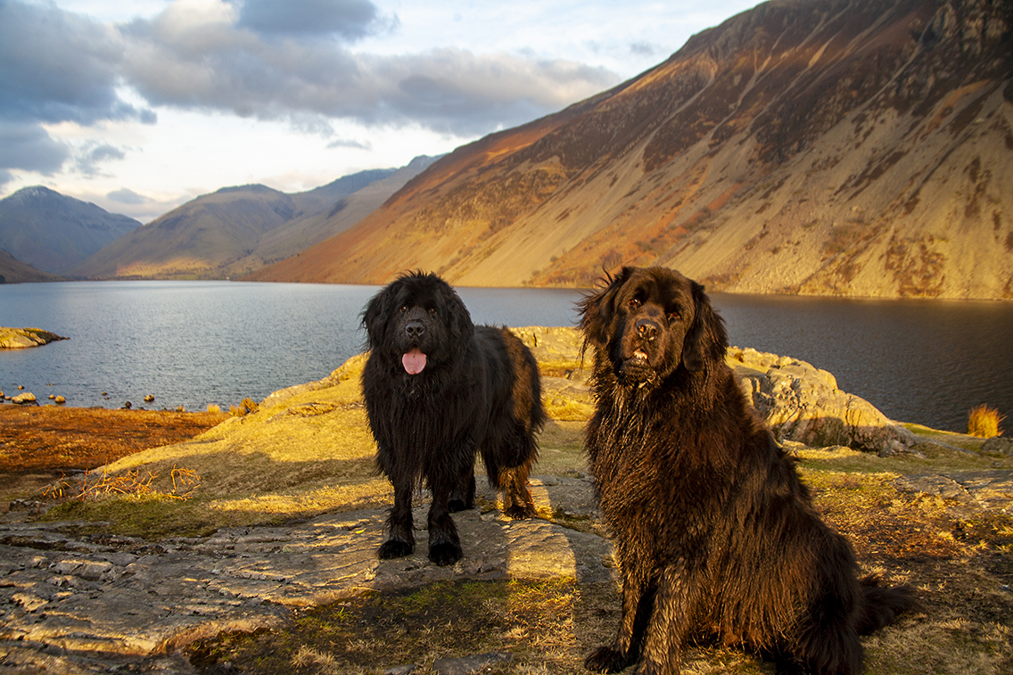 Dogs at Wastwater