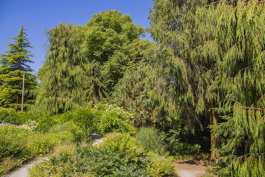 garden hose woodland