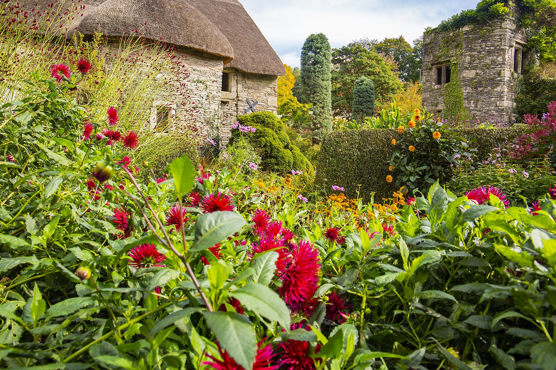 garden house autum dahlia 1