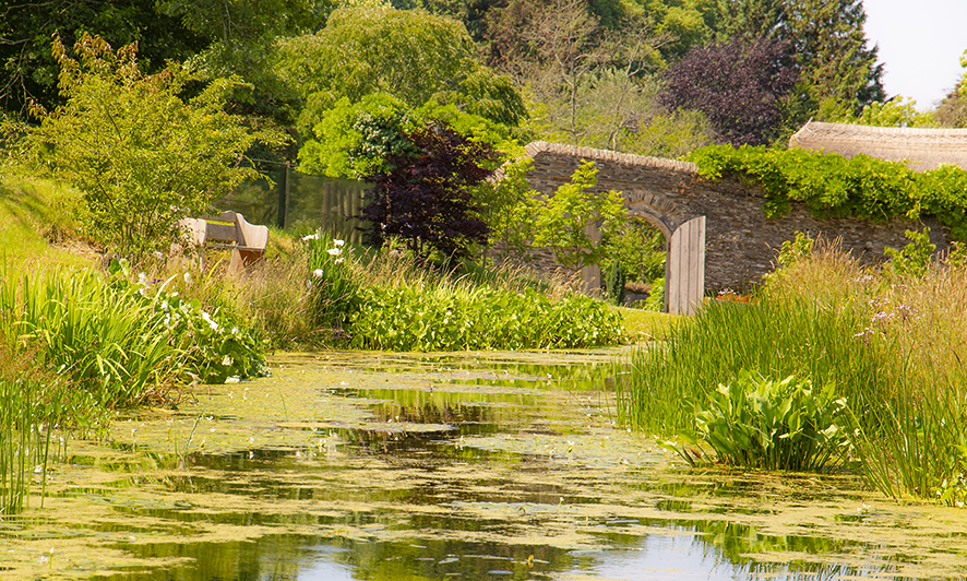 garden house pond