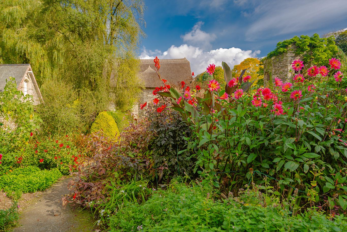Gardenhouse dahlia's