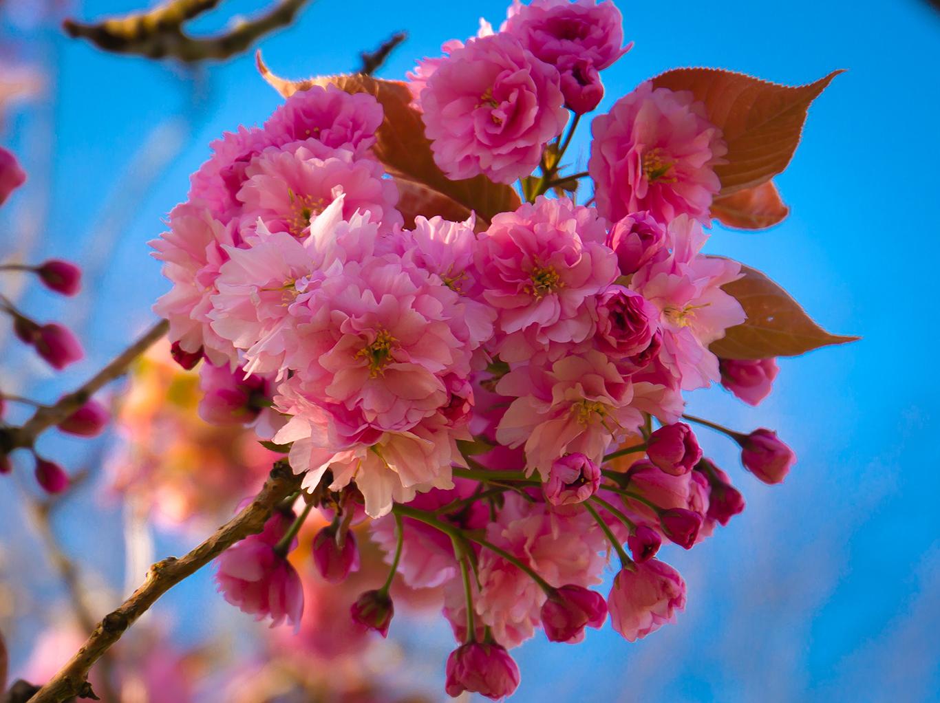 blossom posy