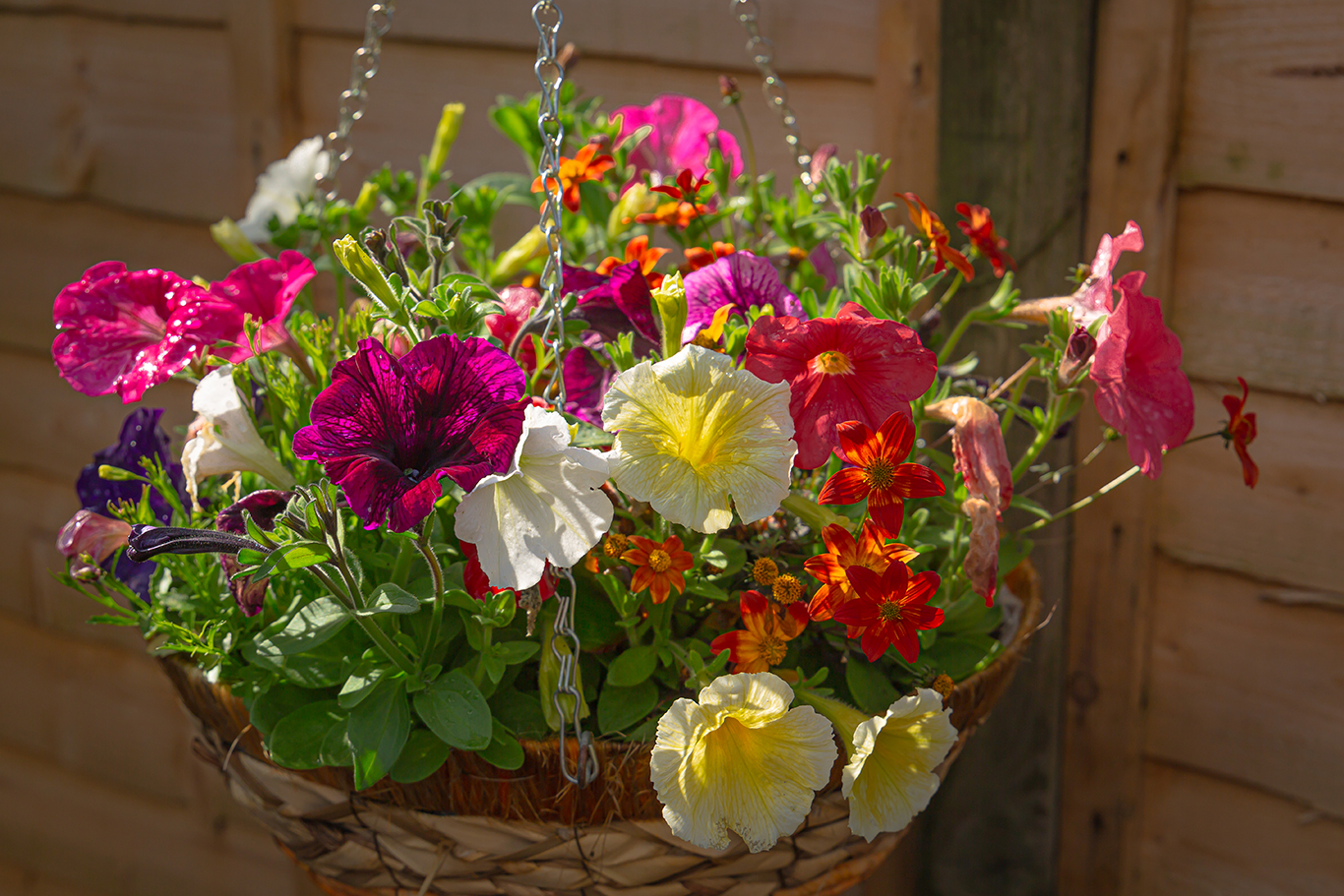 Kims hanging baskets