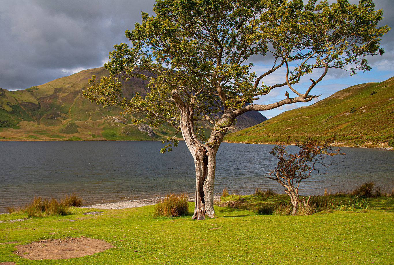 lone tree (1 of 1)