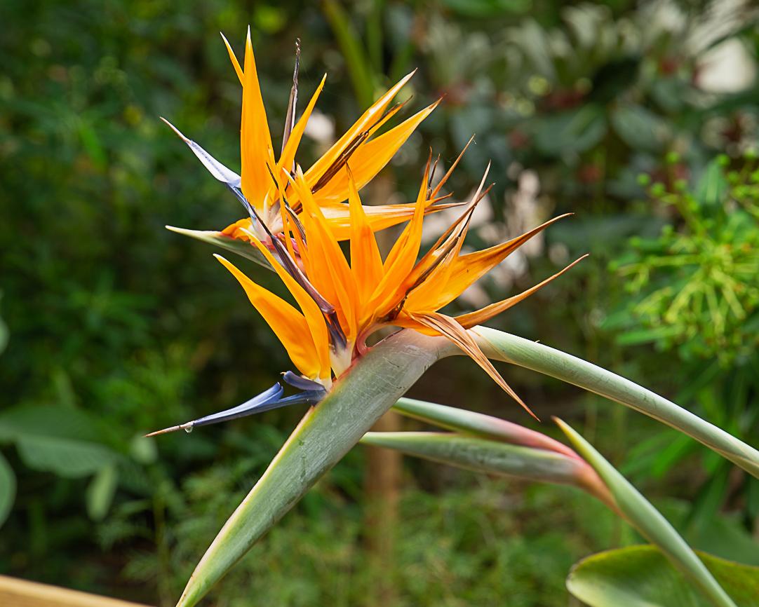 funny flower 2 (1 of 1)