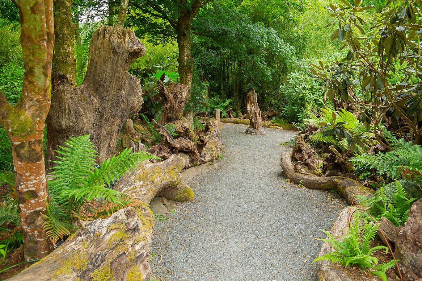 log walk (1 of 1)