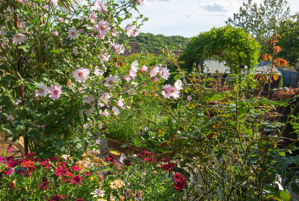Our gardening journey so far at no 56, in this strange year that is 2020